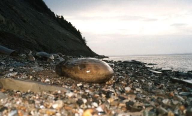 Ny sten på stranden